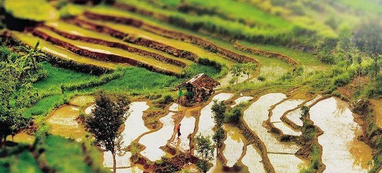 Desa wisata Wukirsari di Imogiri Bantul, sumber ig @suryojdb