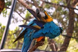 Wahana rekreasi alam dan edukasi di Gembira Loka Zoo, Yogyakarta