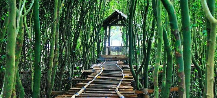 Nikmati Keindahan Hutan mangrive Jembatan Api-Api, Kulon Progo